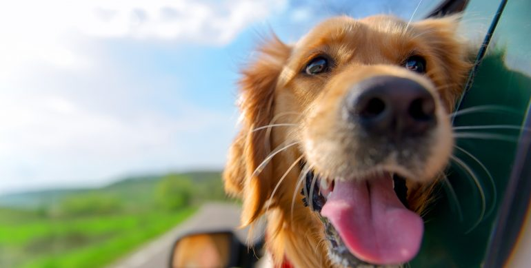 Keeping Pets Safe in Cars