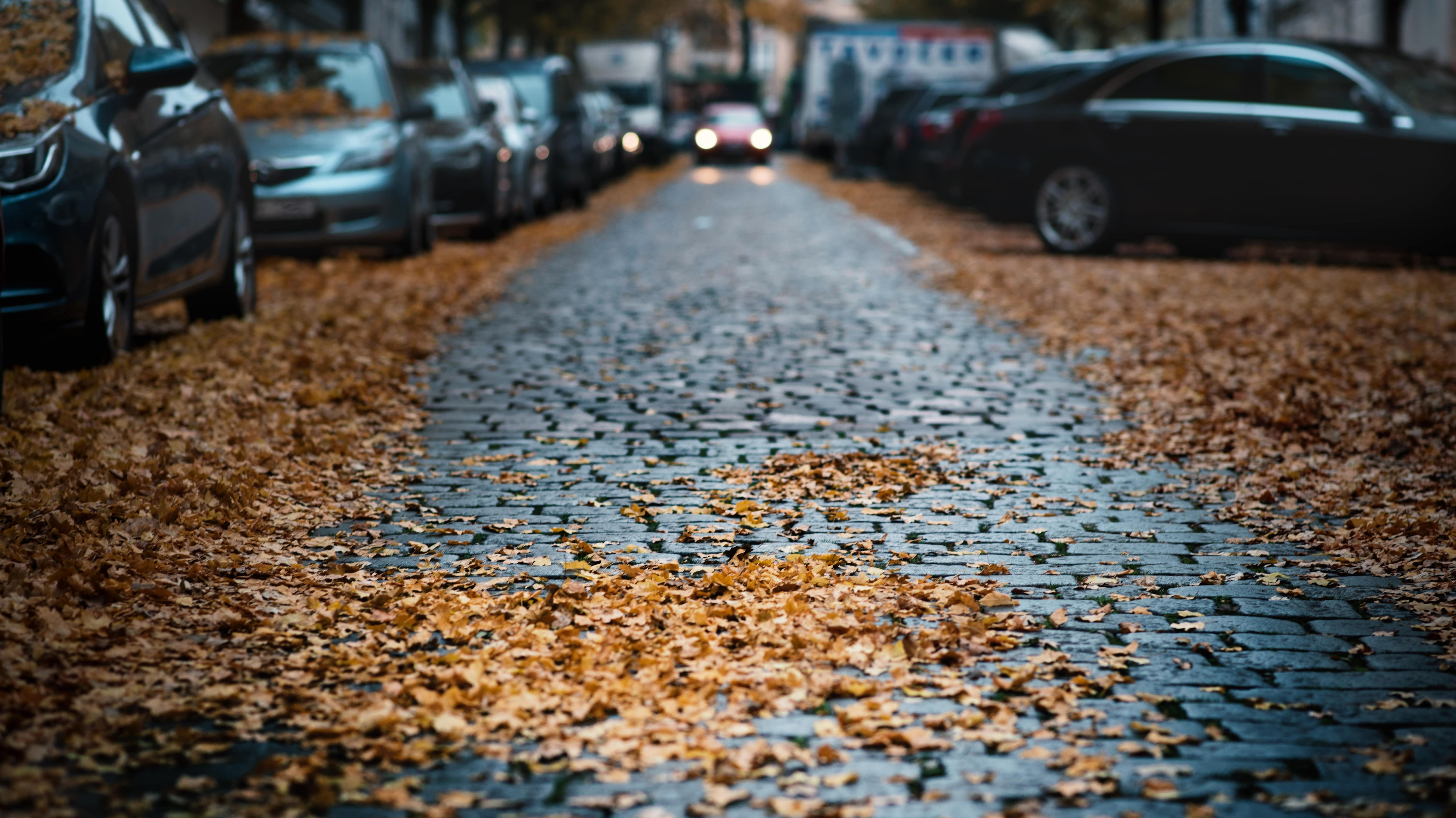 Can Falling Autumn Leaves Damage My Car Auto Body Shop